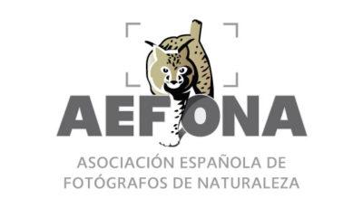logo vector Aefona