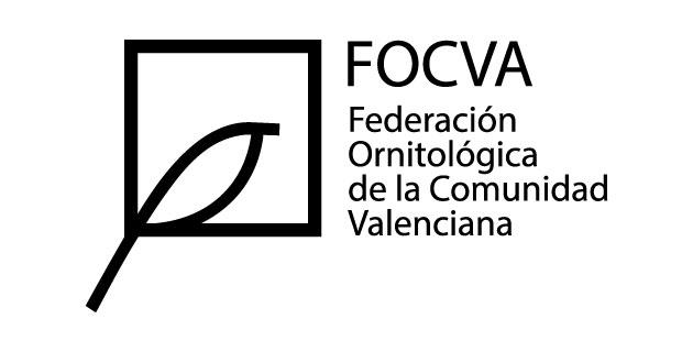 logo vector FOCVA