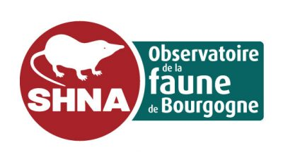 logo vector SHNA